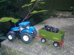 tractor with load of blackberries